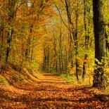 Pory roku Jesień