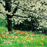 Pory roku Wiosna